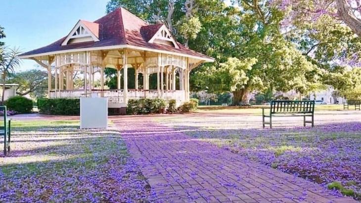 Where to see Brisbane's jacaranda trees in full bloom ...