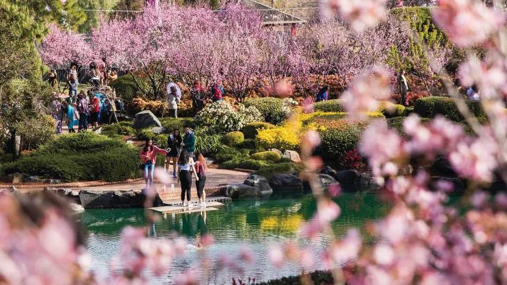 Cherry Blossom Festival Auburn Botanic Garden