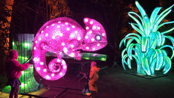 Image result for zoo animal theme lighting