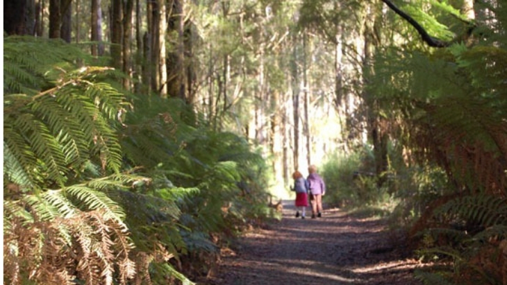 The Best Free Camping Spots Near Melbourne | ellaslist