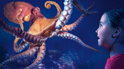 Manly sealife octopus 426x240