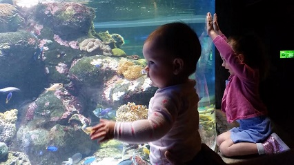 Manly sea life sanctuary review