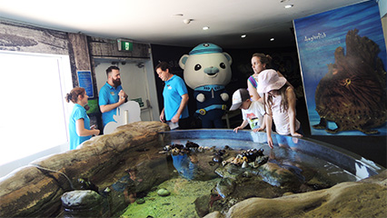 Manly sea life sanctuary octonauts training academy sydney summer 2015 16 426x240