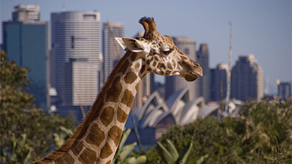 Sydney taronga zoo 1 birthday entry offer during 2016