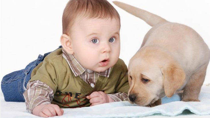 Babies pets reduce obesity