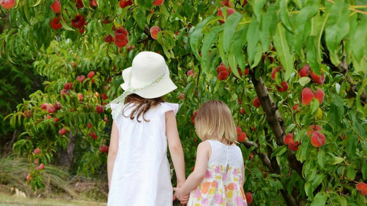 6 of the best places for autumn fruit picking within 90 minutes of melbourne