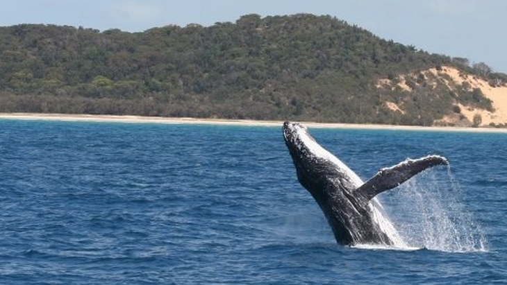 Top things to do in redcliffe brisbane whale watching