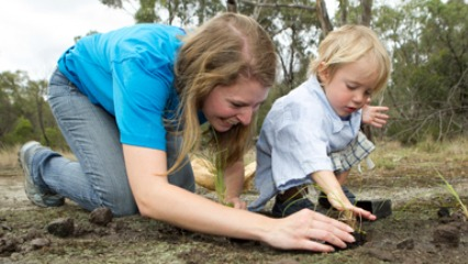 Trees for mum mosman council native plants plant a tree north shore mums
