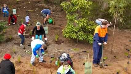 National tree day willoughby city council north sydney planet ark plant a tree