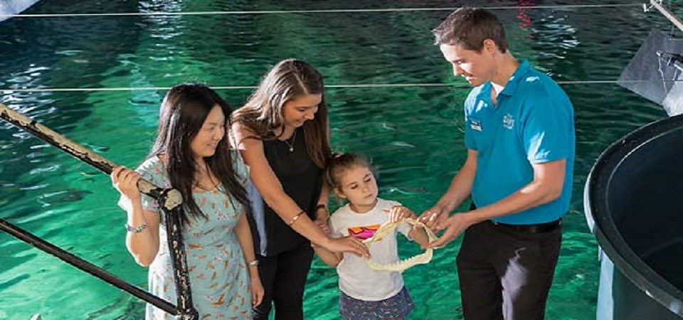 the best attractions at WILD LIFE and SEA LIFE_easter activities for kids 7
