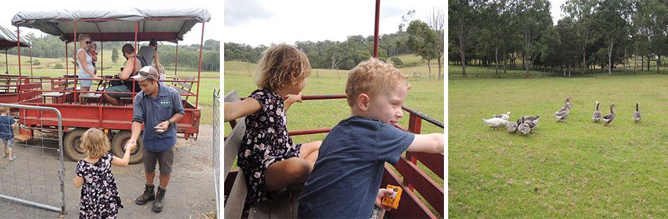 Tractor Rides At Calmsley Hill Farm Sydney 960x316