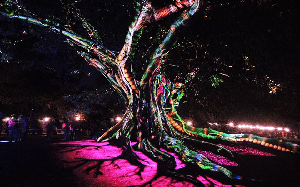 Synthesis, Royal Botanic Garden - Vivid 2016