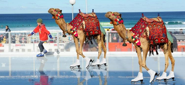 camel ice skating