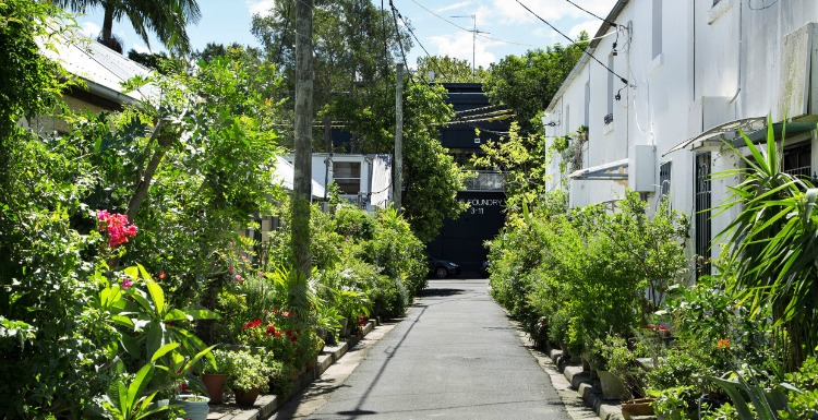 The Design Files x The Planthunter McElhone Place , Surry Hills (Cat Alley)