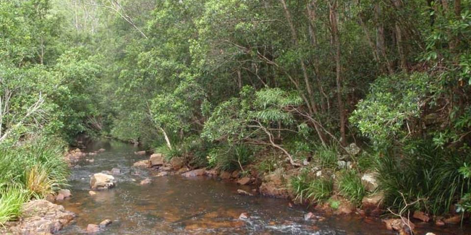 best camping spots in nsw_swans creek