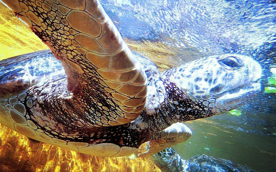 Living Coast Discovery Centre San Diego 960x600