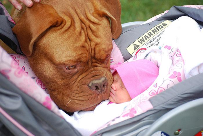 protective dog