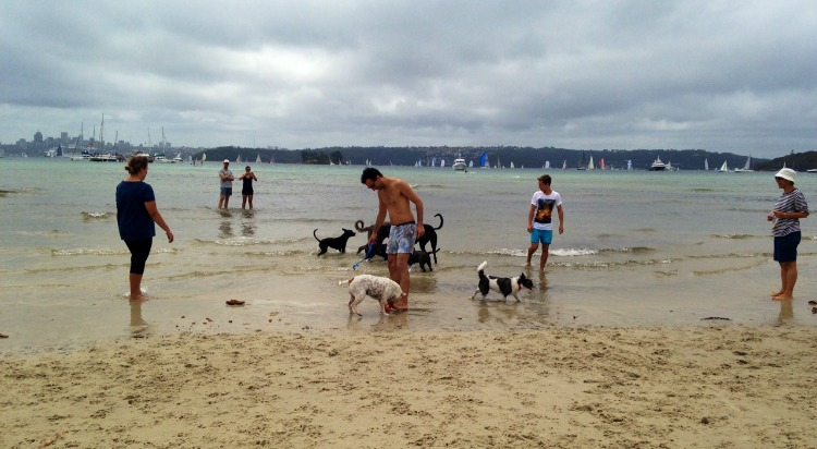 Sydney 39 s best dog friendly beaches ellaslist for Pet friendly hotels sydney