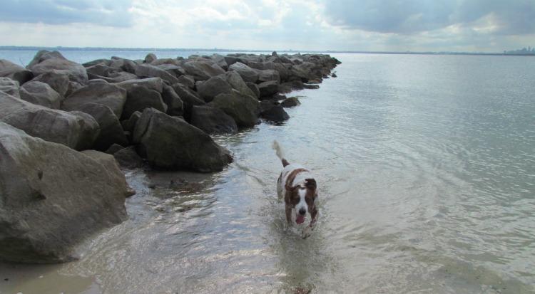 silver beach dog friendly