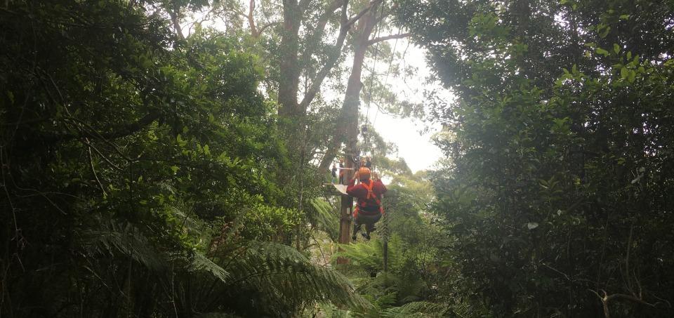sydney ziplining