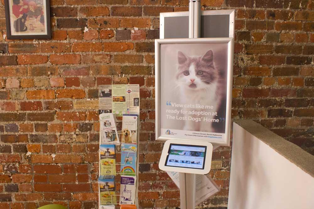 Pat a Cat on a Mat: Melbourne's Cat Cafe