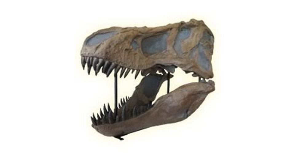 Dinosaur Diggers