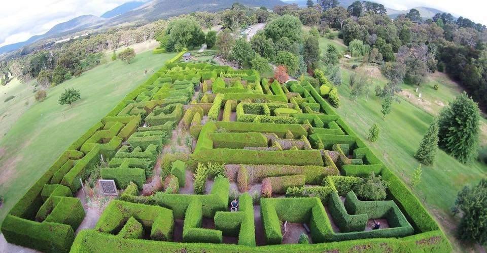 Hedgend Maze