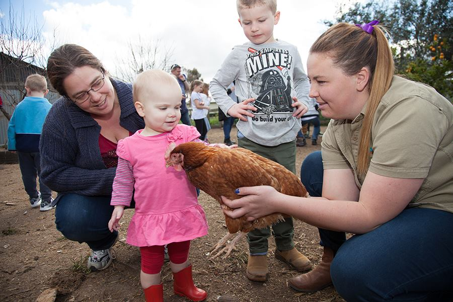 Best Places to Pat Animals in Melbourne | Animal Land Children's Farm