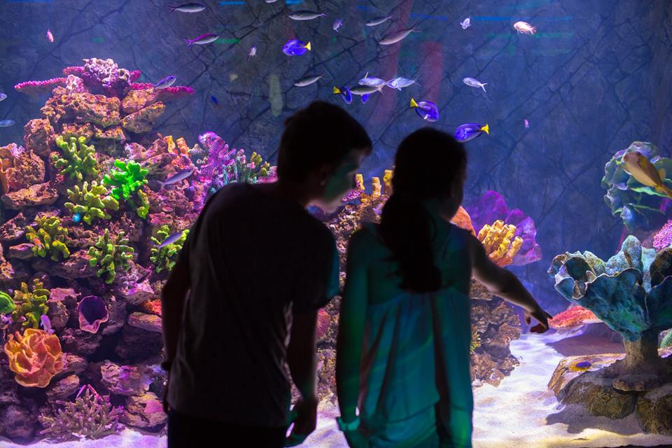 Six of the Best Indoor Places to Visit on a Rainy Day in Melbourne | Sea Life Melbourne Aquarium