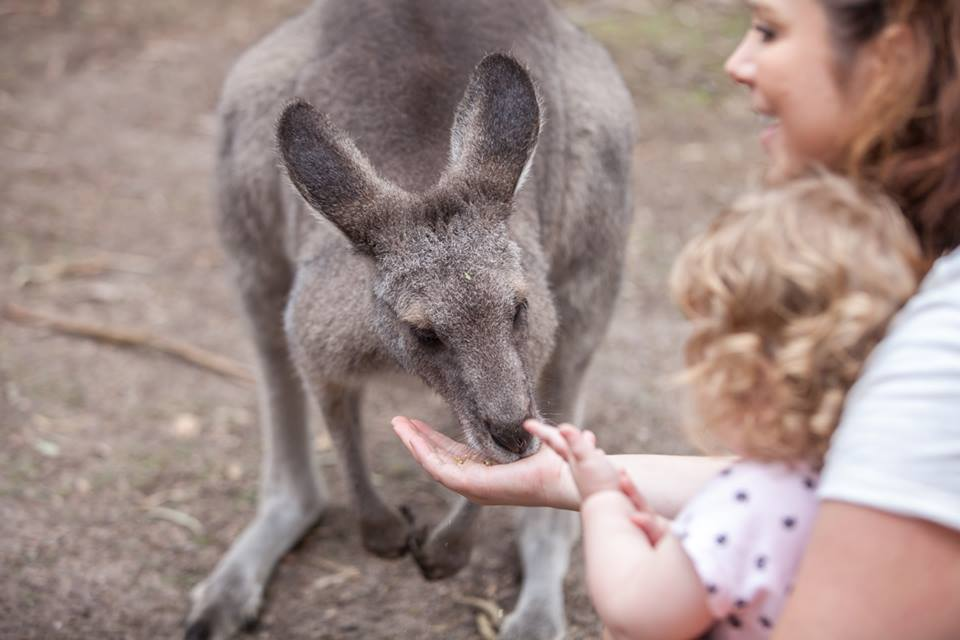 Best Places to Pat Animals in Melbourne | Moonlit Sanctuary Wildlife Conservation Park