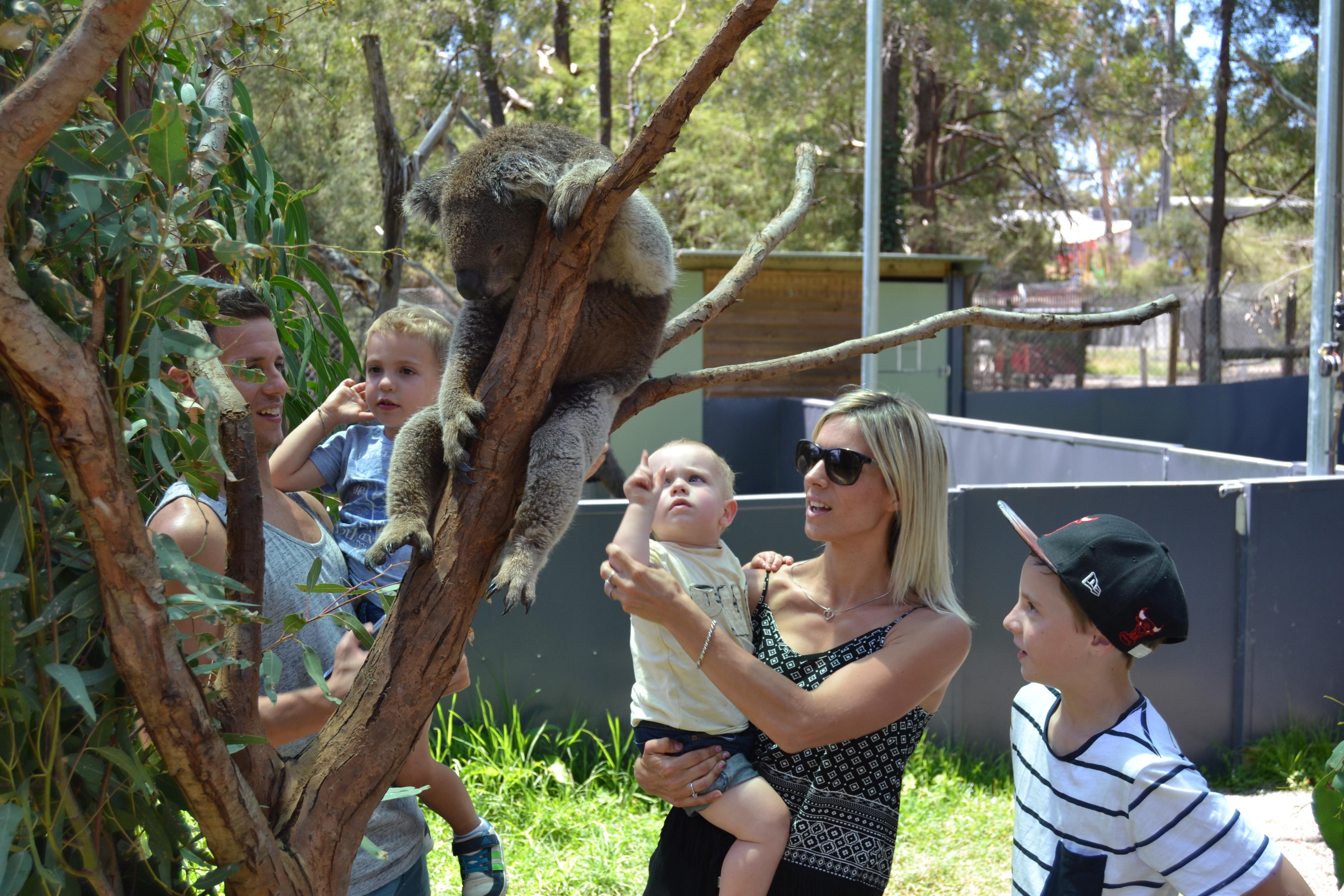 healesville-sanctuary-animals with kids